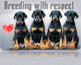 Breedig with respect